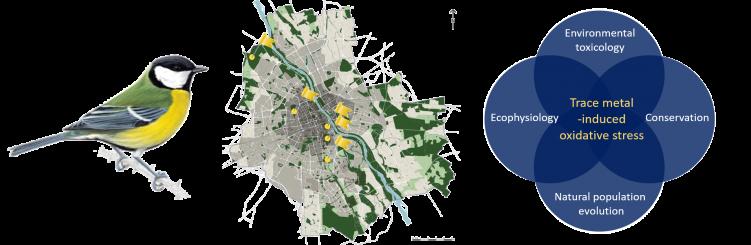 Image1 proposal 2